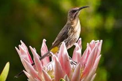 Supertubes Jeffreys Bay Bird_Watching