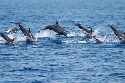 Supertubes Jeffreys Bay Dolphin Watching