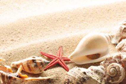 Shells on Supertubes Beach