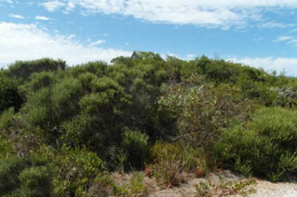 Supertubes Jeffreys Bay Nature_Reserves